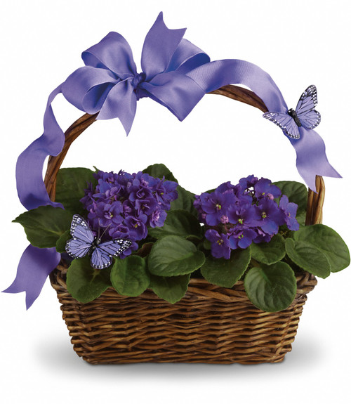 HCMC Violets And Butterflies