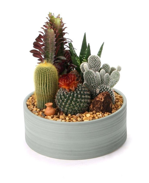 Custom Made Cactus Dish Garden