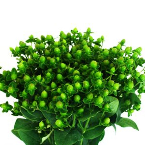 Hypericum Berries 10 Stem Bunch