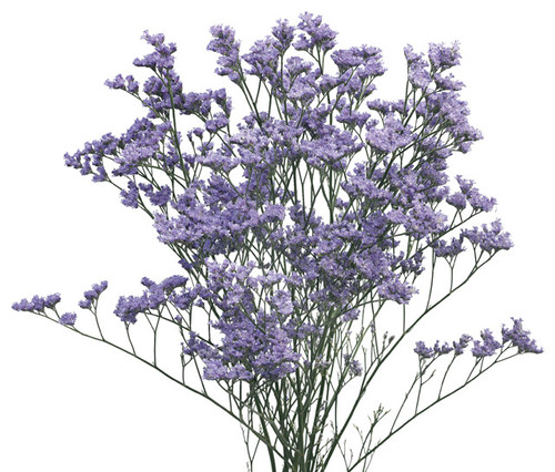 Limonium-5 Stem Bunch  LOCAL/MPLS DELIVERY ONLY