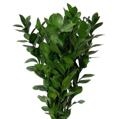 Greens-Bunches Vary