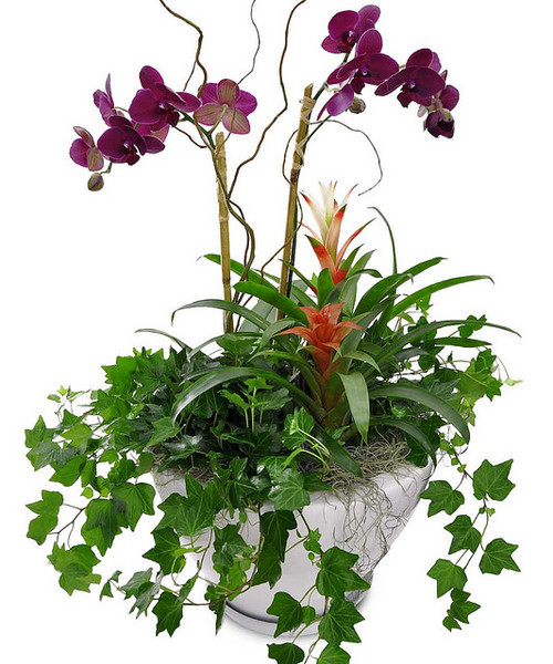 Orchids & Ivy Planter