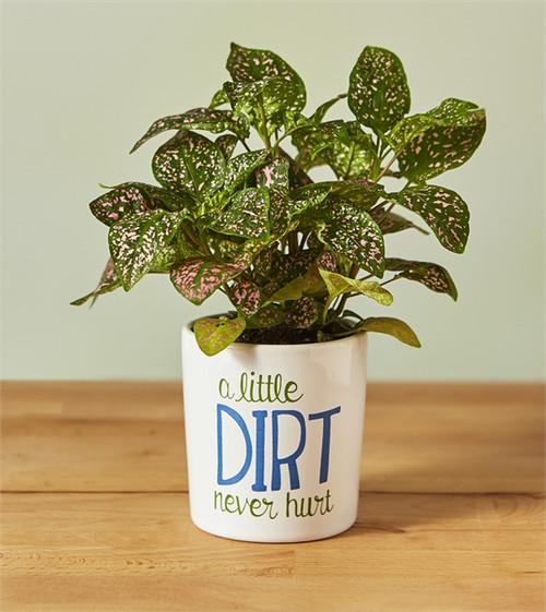 Little Dirt Never Hurt Mini Planter