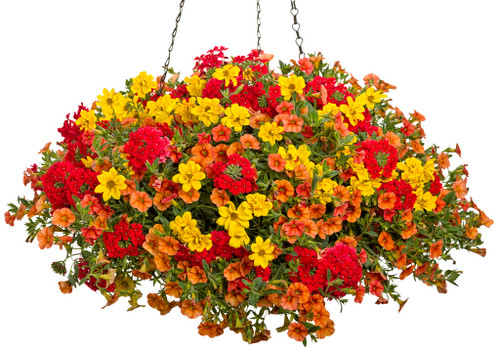 Outdoor Awesome Hanging Annual Baskets- Local Delivery Only