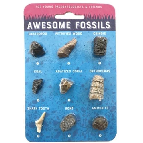 Fossil Card - Fossil Specimen Card