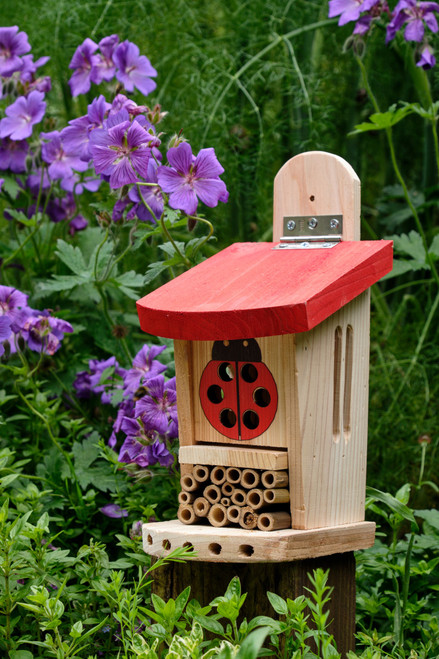Ladybug and Insect Lodge