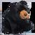 Almond Black Bear by Douglas