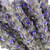 English Lavendar- 20 Single Stems  LOCAL/MPLS DELIVERY ONLY