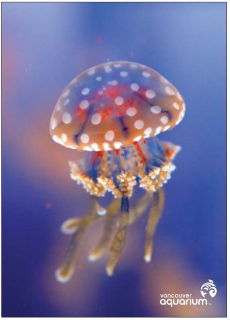 spotted jelly postcard