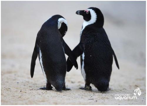penguin pair postcard