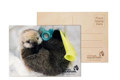 Sea Otter pup postcard