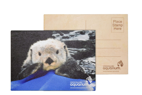 sea otter postcard