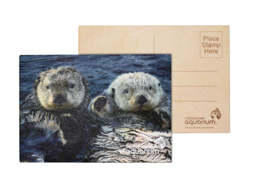sea otter pair postcard