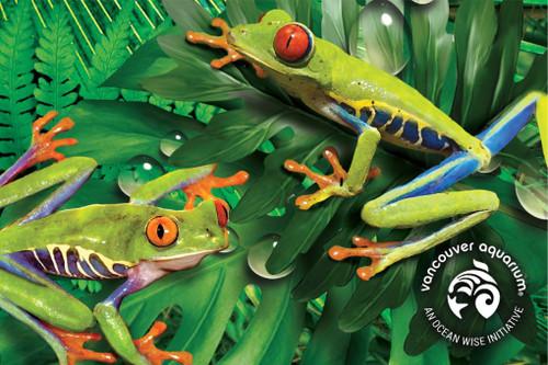 3D Frog Postcard
