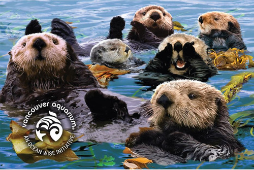 3D Sea Otter Raft Postcard