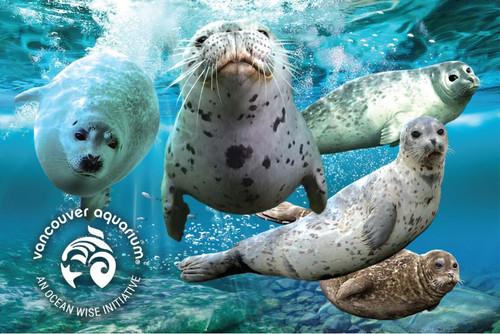 3D Harbour Seals Postcard