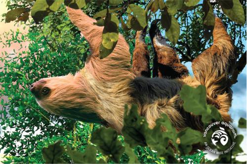 3D Sloth Postcard