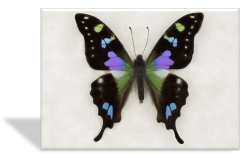 Purple Swallowtail Butterfly Greeting Card