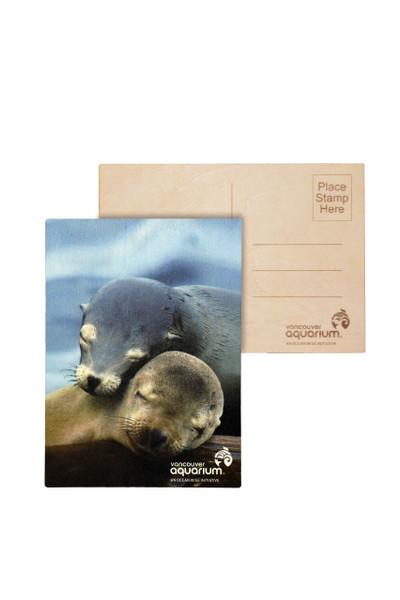 sea lions postcard