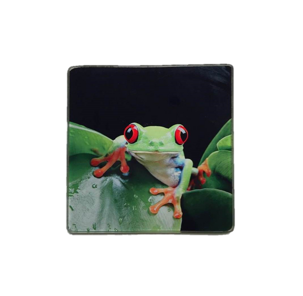 Glass Frog Coaster