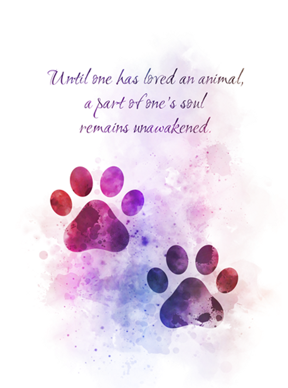 Paw Prints Animal Quote Art Print Cat Dog Pet Love Inspirational Gift Wall Art Home Decor My Subject Art