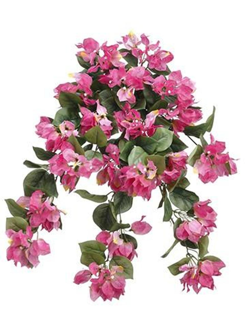 24 Bougainvillea Hanging Bush Mavue Pink 6 Pieces Fbb103 Mv Pk