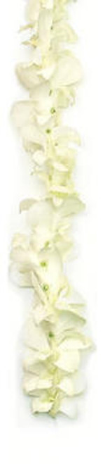 "White Orchid Lei - Due to a range of growing conditions this season these ""white"" orchids may be pure white, slightly greenish white or pinkish white."