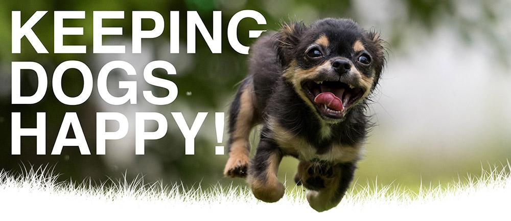 happydog-sm.jpg