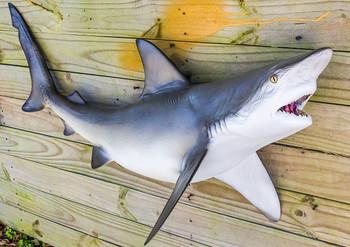 Bull Shark 42 inch Full Mount Fiberglass Fish Replica