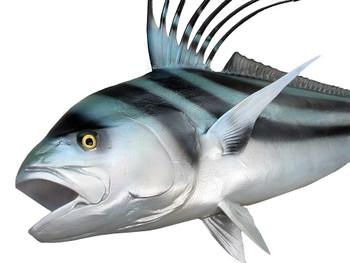 Roosterfish fiberglass fish replica