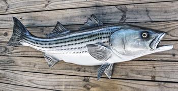 Striped Bass, Rockfish Striper fiberglass fish replica
