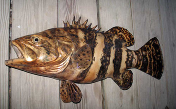 Goliath Grouper fiberglass fish replica