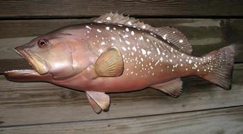 Red Grouper fiberglass fish replica