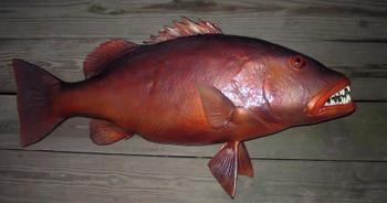 Cubera Snapper fiberglass fish replica