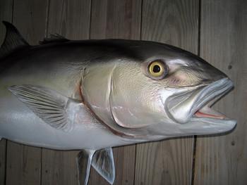 Amberjack fish replica