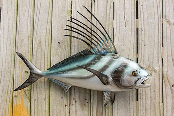 Roosterfish fiberglass fish replica
