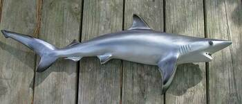 Blacktip Shark 40 inch full mount fiberglass fish replica