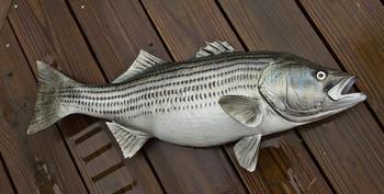 Striped Bass 34 inch full mount fiberglass fish replica - also Striper, Rockfish