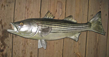 Striped Bass, Rockfish, Striper fiberglass fish replica