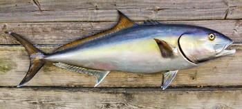 Amberjack fiberglass fish replica