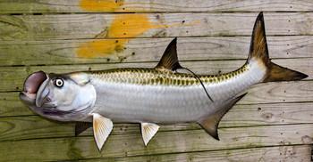 Tarpon fish mount