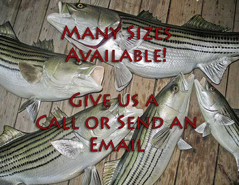 Many Sizes Available - Stripers