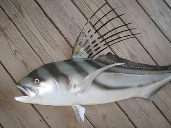 Roosterfish 55 inches Half Mount Fiberglass Fish Replica