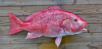 Red Snapper 34 inch Full Mount Fiberglass Fish Replica