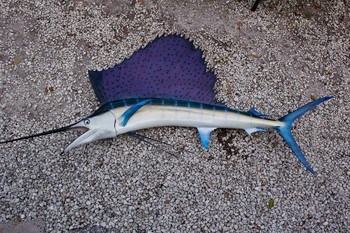 Sailfish 74L inch Full Mount fiberglass Fish Mount