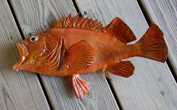 Acadian Redfish 18 inch half mount fiberglass fish replica