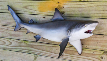 Bull Shark fiberglass fish replica