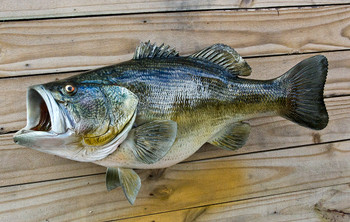Largemouth Bass 25L inches Full Mount Fiberglass Fish Replica