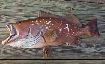 Grouper, 35 inch Red Half Mount Fish Replica