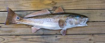 Redfish fiberglass fish replica